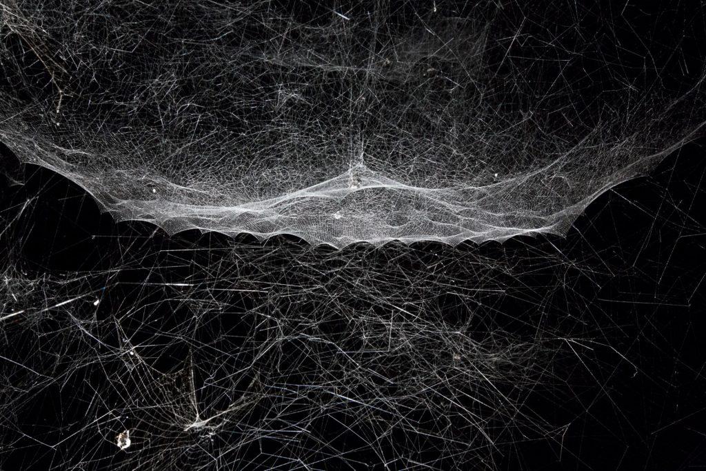 Hybrid Webs
